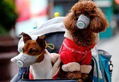 ¿Pueden los animales contagiar a las personas de COVID-19?