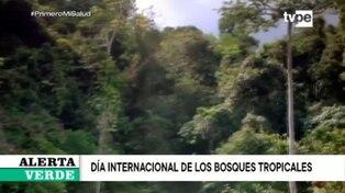 Perú es el cuarto país con mayor extensión de bosques tropicales