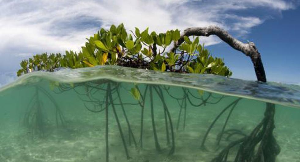 Los peces más comúnes están despareciendo de los océanos - 6