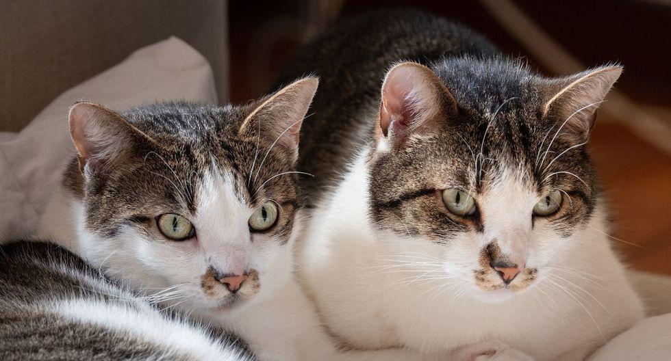 Los gatos protagonistas cautivaron a cientos de personas. (Foto: ViralHog / YouTube)