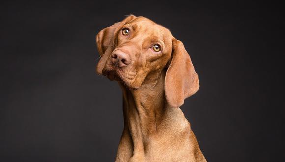 Cada año de vida de un perro no equivale a 7 años humanos, como muchos piensan. (Foto: Pixabay)