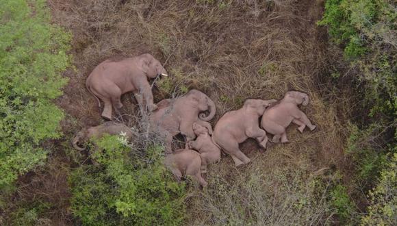 Las autoridades dicen que los elefantes pueden estar regresando a casa. (Reuters).