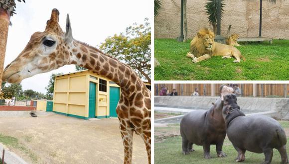 Animales nativos de África son las principales atracciones