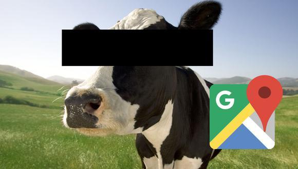 ¿Sabes por qué Google censura los rostros de las vacas? Esta es la respuesta que te sacará de dudas. (Foto: Google)