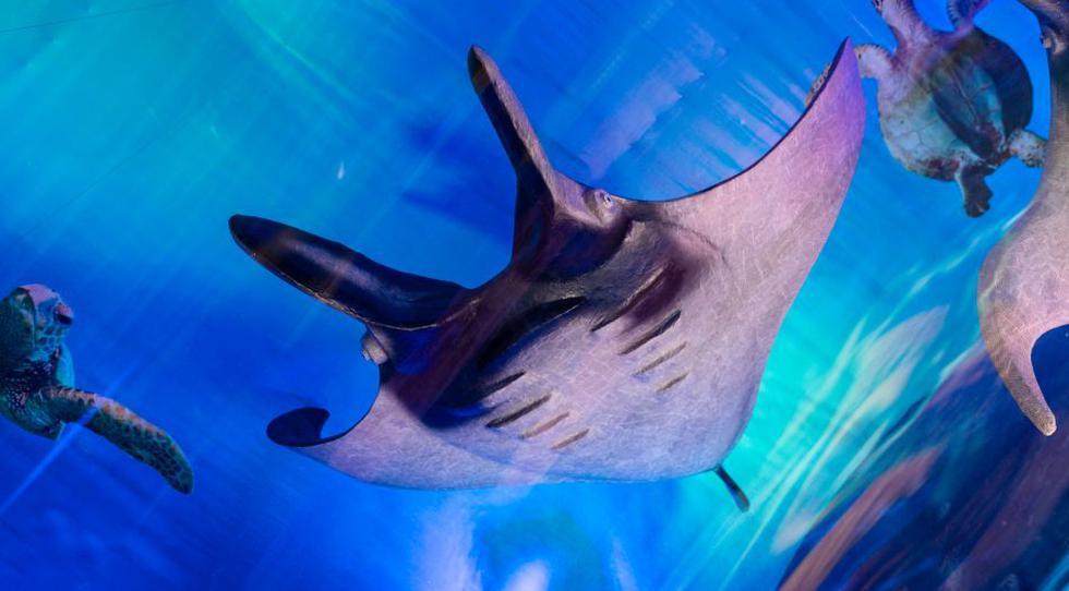 El acuario fue desarrollado por Wong con el apoyo técnico de organizaciones benéficas.