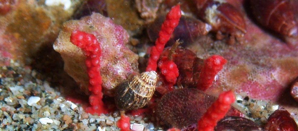 Este es el nuevo coral hallado en Paracas - 1