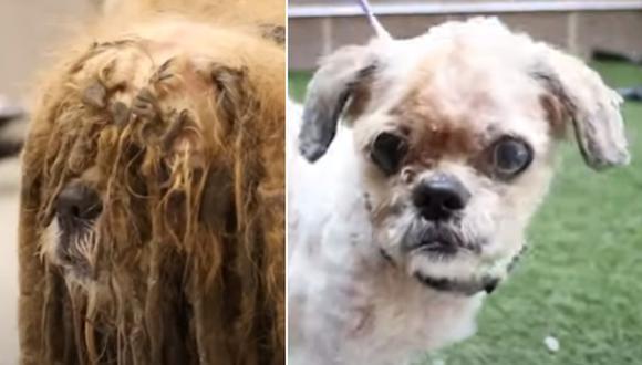 Simon, el perro callejero que fue rescatado de un completo abandono. (Foto: KHOU 11 / YouTube)