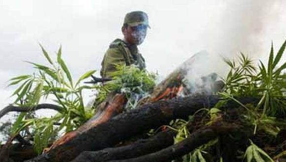 Huaura: Incineran más de tres mil plantones de marihuana