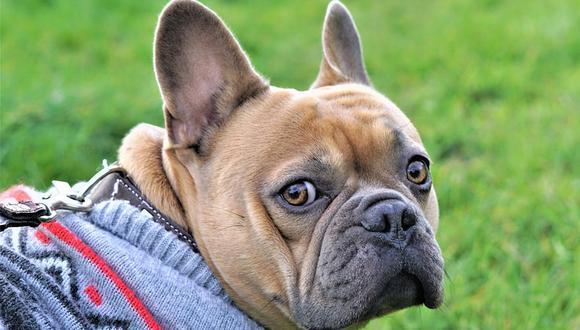El can tenía bastante hambre, pero esperó a que su dueña le dijera que ya podía comer. (Pixabay)