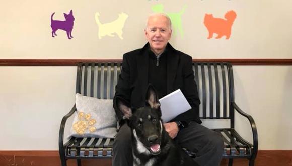 Major, la mascota de Joe Biden, será el primer perro rescatado que habite la Casa Blanca. (Foto: @delawarehumane)