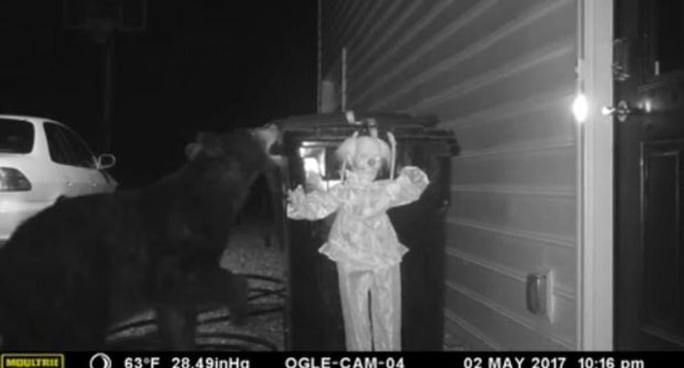 Harto de los osos, creó un curioso 'sistema' para espantarlos
