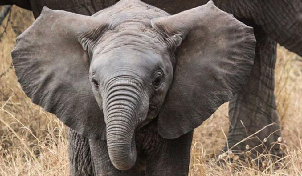 El video del elefante conmovió a miles de personas en las red. (Foto referencial: Pixabay)