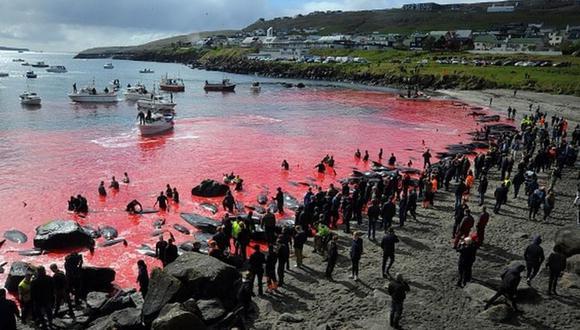 La caza de ballenas (foto) y de delfines es legal en las Islas Feroe. (Imagen de archivo / Getty Images).