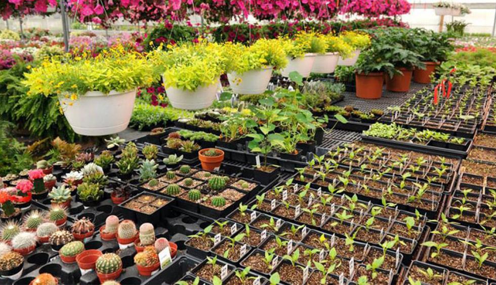 Vivero 4 Estaciones. Lucky bambu, bromelias y orquídeas son algunas de las plantas para interiores que podrás adquirir en este lugar. (Foto: Facebook Vivero 4 Estaciones)