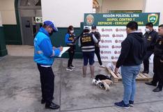 Once canes que iban a ser vendidos de manera ilegal fueron rescatados en Mesa Redonda
