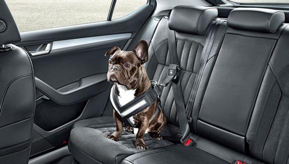 Los perros también tienen su cinturón de seguridad