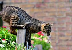 Un travieso gato salta al lomo de un caballo y protagoniza hilarante escena en establo