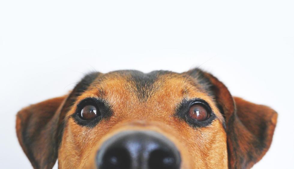 En Facebook se volvió viral el video de un perro que contesta con ladridos las preguntas matemáticas que le hacía su dueño. Con todos los aciertos, el can se volvió la sensación en una calle de Colombia. (Foto: Pixabay)