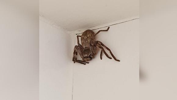 Cathy Cox encontró una araña cangrejo en una de las paredes de su ducha y preguntó a los usuarios qué hacer con ella. (Foto: Cathy Cox / Facebook)