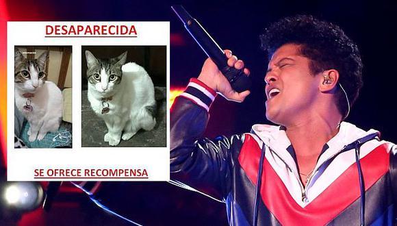 Bruno Mars: si le devuelven gata regalará entrada a concierto