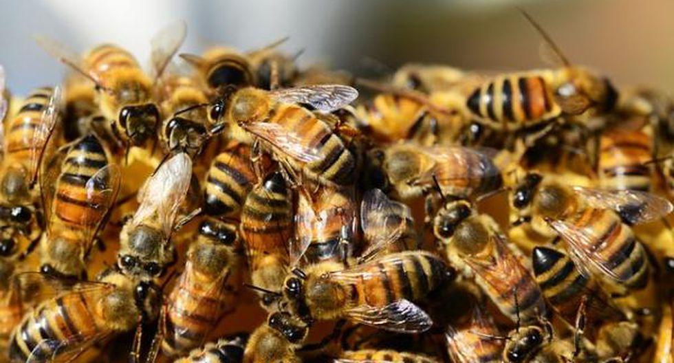 ¿Qué harías si vivieras solo unas semanas, como las moscas? ¿Y unas horas, como los efemerópteros? Descubre las reducidas esperanzas de vida de algunos animales. (Foto: Difusión).