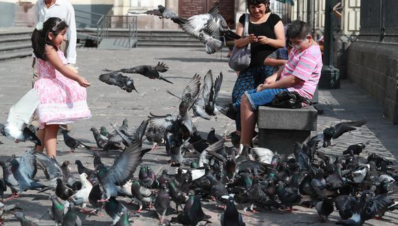 """LIMA 17 DE ENERO DEL 2020. Palomas se """"apropian"""" de la ciudad, FOTO: LINO CHIPANA OBREGÓN"""