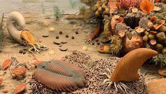 Los trilobites tenían órganos respiratorios en sus patas, en forma de bolsas colgando de sus muslos. (UCR)