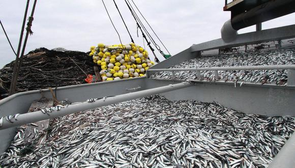 Multarán a 14 naves por extraer anchoveta en áreas suspendidas