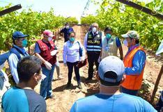 Coronavirus en Perú: Encuentran a 400 trabajadores sin protección en un fundo agrícola en Ica