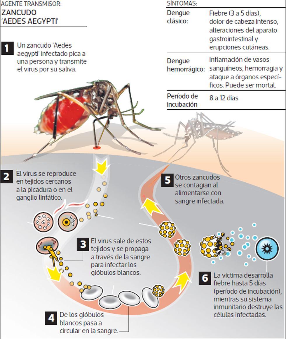 Áncash: 4.210 viviendas fueron fumigadas en Coishco por dengue - 2