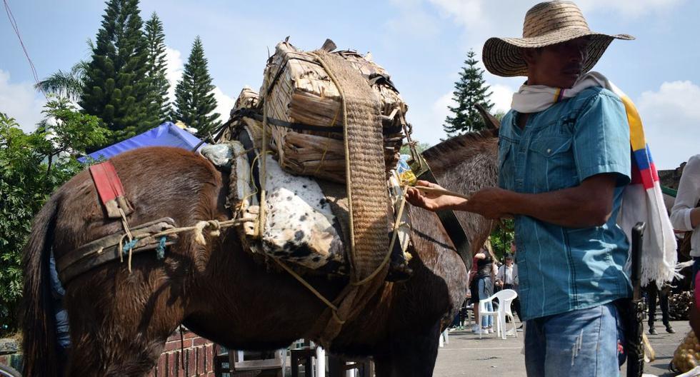 Los vecinos de Moniquirá viven tranquilamente sus días. Buena parte de ellos se dedica al cultivo de plátano, yuca y caña de azúcar. (Efe)