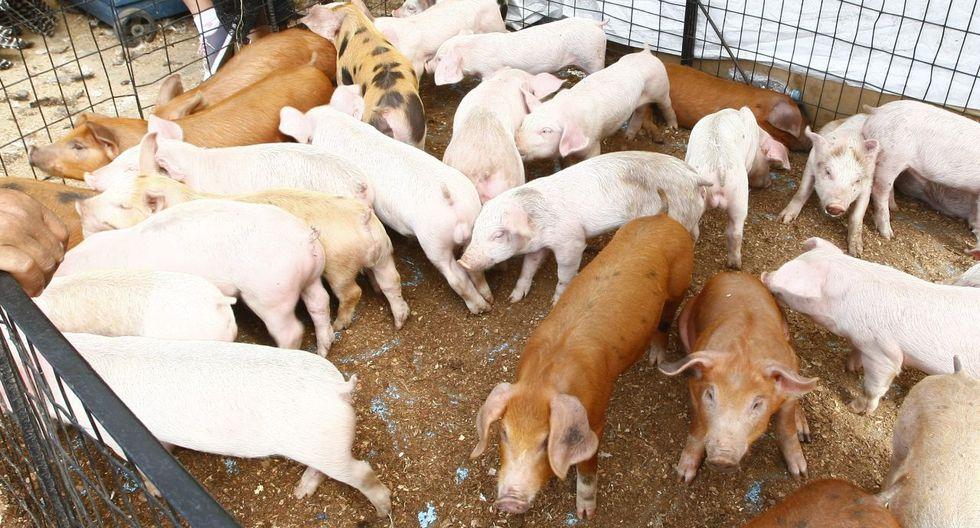 China es uno de los mayores consumidores de cerdo. (Foto: GEC)