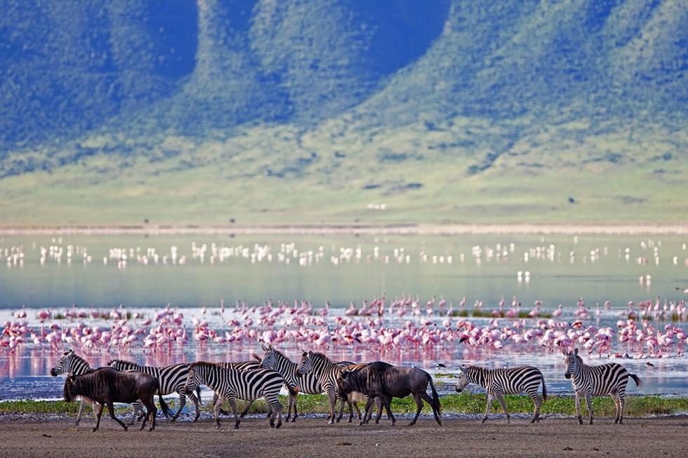 En el sector sur del área de conservación de Ngorongoro avistarás cebras, ñués y gacelas.(Fotos: iStock / Shutterstock)