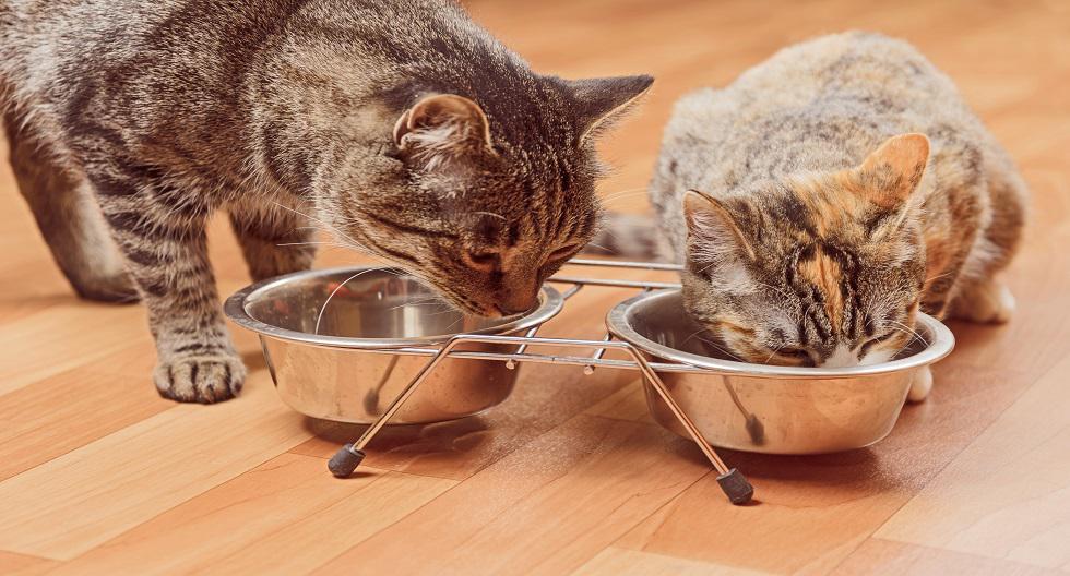 1. Comedero y bebedero: tu mascota debe tener un recipiente para el agua y la comida que ingerirá diariamente. Es importante que estén siempre limpios al momento de servir los alimentos. También se debe estar pendientes de que el agua esté siempre llena. Asimismo, para este verano se debe añadir un hielo al cuenco del agua. Este pequeño truco hará que el agua se mantenga fresca durante más tiempo y, gracias a ello, no necesitaremos renovarla de forma tan regular. (Foto: Shutterstock)