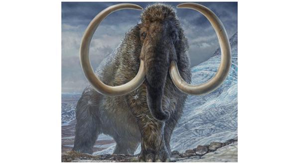 Un mamut lanudo macho adulto navega por un paso de montaña en el Ártico de Alaska hace 17.100 años. (JAMES HAVENS)