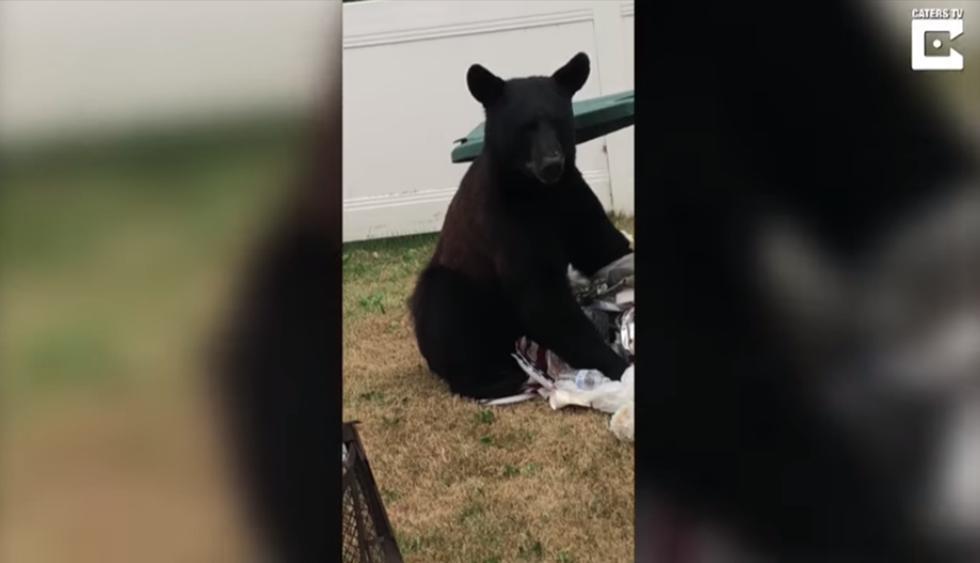 Confronta a enorme oso que se metió a su casa y el final impacta a miles. (Foto: YouTube|Caters Clips)