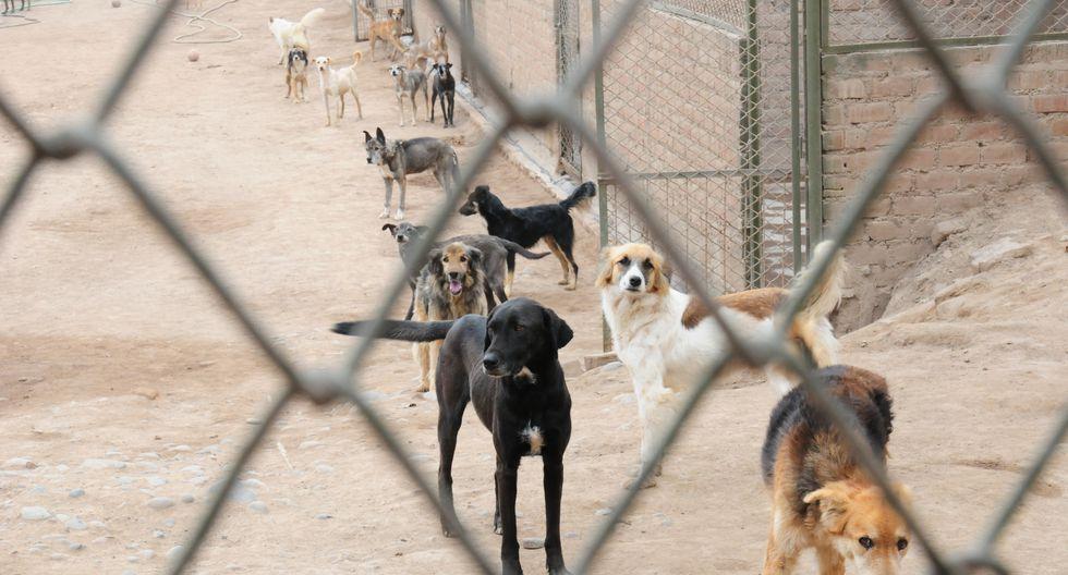 WUF promueve la adopción de perros de 6 albergues y lo hace a través de su portal wuf.pe
