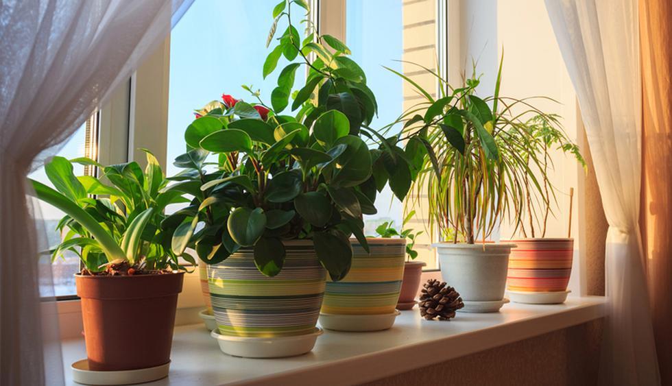 Producen un efecto relajante. Las plantas afectan de manera eficaz al estado de las personas dando una sensación de tranquilidad. (Foto: Shutterstock)