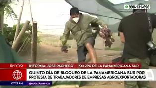 Personas varadas en la Panamericana Sur ingresan a viñedo y se llevan racimos de uva