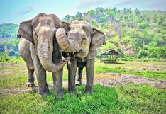Ciencia: la desaparición de los elefantes podría causar una emergencia planetaria