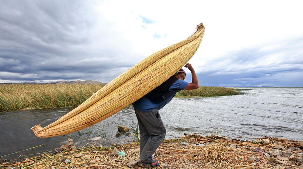 La totora, el tesoro verde que será exportado a Holanda [FOTOS] - 6