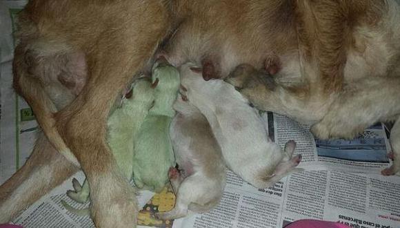 Dos perros de color verde nacieron en España
