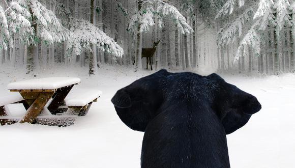 Koda es el nombre de este husky que fue encontrado teniendo aventuras con un venado. (Foto: PixaBay)