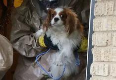 Perro de enfermera estadounidense con ébola tiene nuevo hogar
