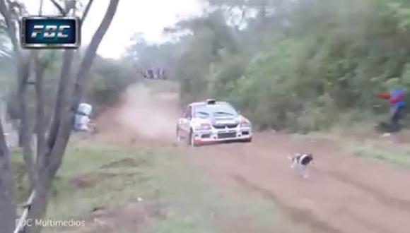 El perro con más suerte del mundo estuvo en este rally [VIDEO]