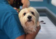 WUF: ¿Cómo saber si debes llevar a tu perro al veterinario?