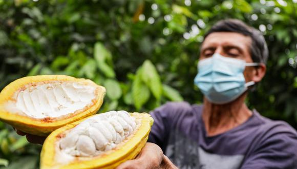Dos asociaciones de productores de Piura ganaron los primeros puestos del Concurso Nacional de Cacao. (Foto: Midagri)