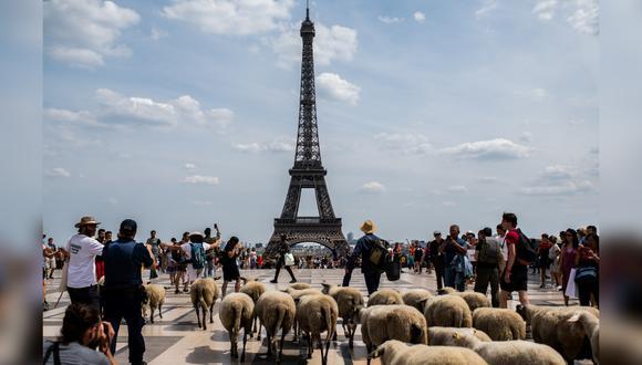 Guiado por dos pastores, el rebaño estuvo vigilado por policías motorizados y voluntarios a pie que les ayudaron a cruzar las calles de la capital francesa. (Foto: AFP)