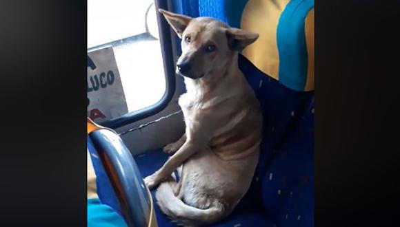 Perro callejero de una comuna de Santiago de Chile despertó ternura en Facebook. (Foto: Captura)