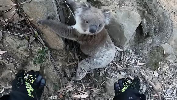 Un motociclista ayudó a un koala a subir a una roca y se ganó la admiración de los usuarios de las redes sociales | Foto: Captura de YouTube / ViralHog